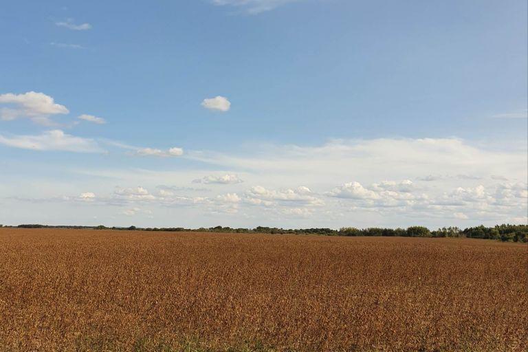 Большинство соесеющих районов Амурской области закончили уборку ранних зерновых культур и приступили к уборке сои