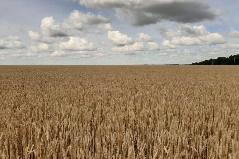 В министерстве сельского хозяйства региона подвели итоги уборочной 2020 года.