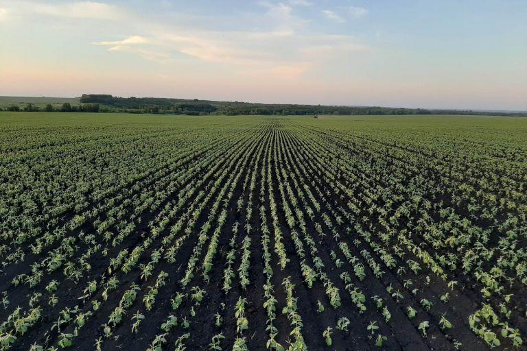 Урожайный год 2020.
