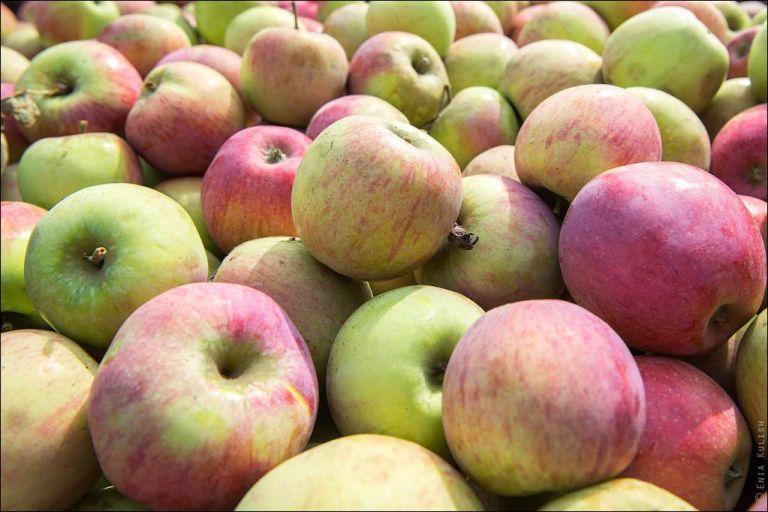 Субсидии для многолетних плодовых и ягодных насаждений