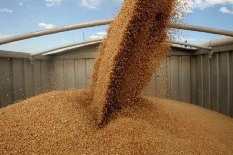 В Красноярском крае обсудили вопросы безопасности и качества зерна на экспорт
