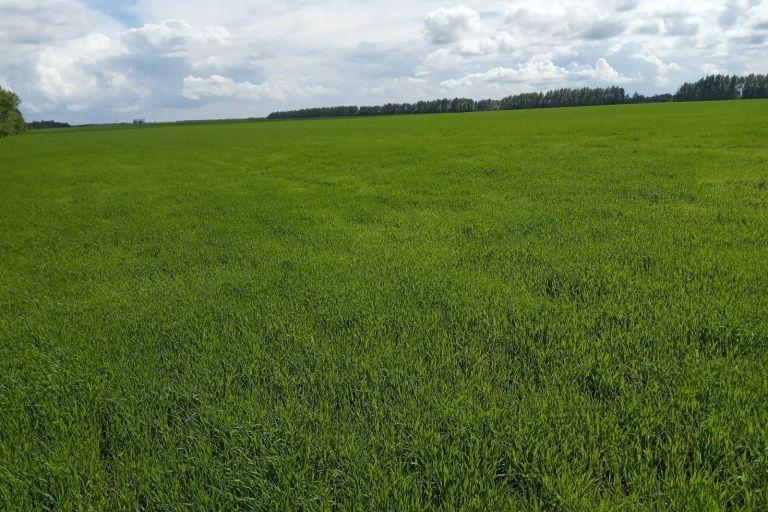 Фитосанитарное состояние посевов сельскохозяйственных культур  на 2 июня 2021 года