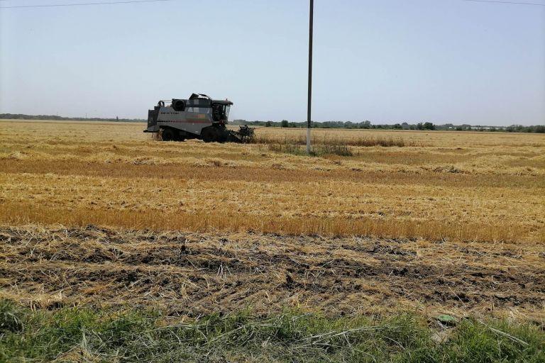 Уборка зерновых стартовала