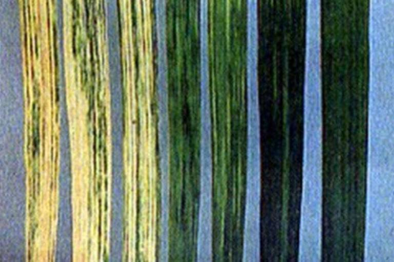 Вирус русской мозаики озимой пшеницы (ВРМОП)