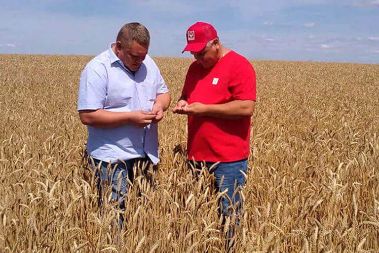 Особенности системы защиты озимой пшеницы в Республике Мордовия препаратами Кирово-Чепецкой Химической компании