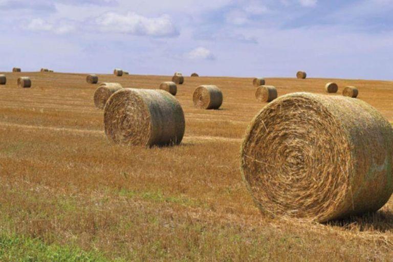 Правительство изменило госпрограмму развития сельского хозяйства