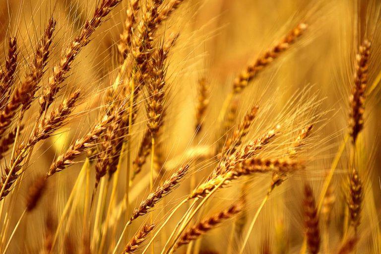 Производство российской ржи в 2019 году снизилось до 10-летнего минимума