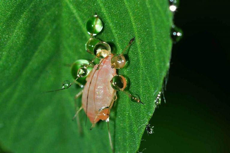 Ученые нашли способ блокировать устойчивость насекомых к пестицидам