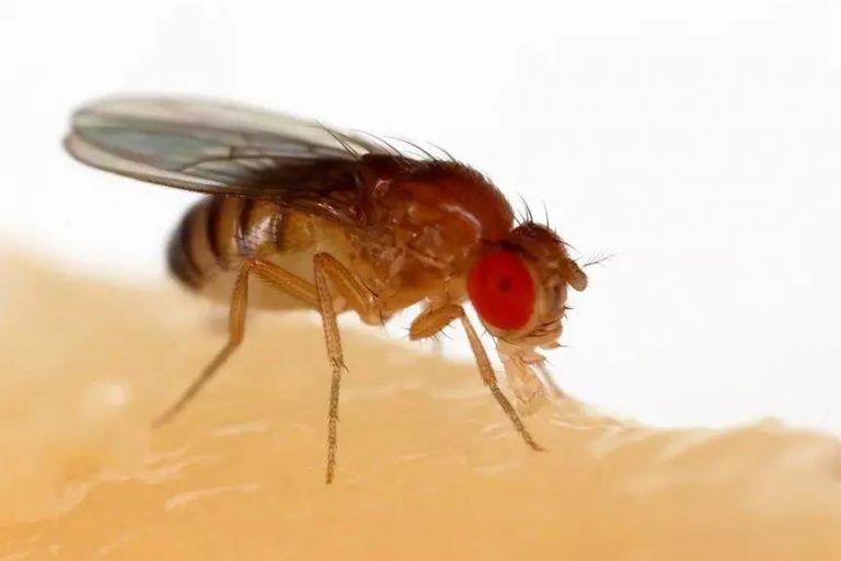 """Ученые научились """"стирать"""" память насекомым"""
