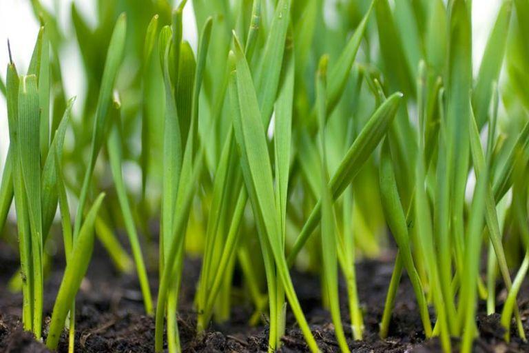 Ученые создали инновационное органическое удобрение