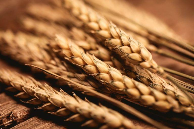 Самые опасные вредители семян зерновых в условиях хранения