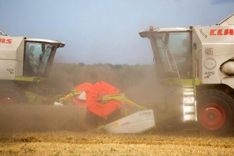 Внутренние цены на пшеницу растут