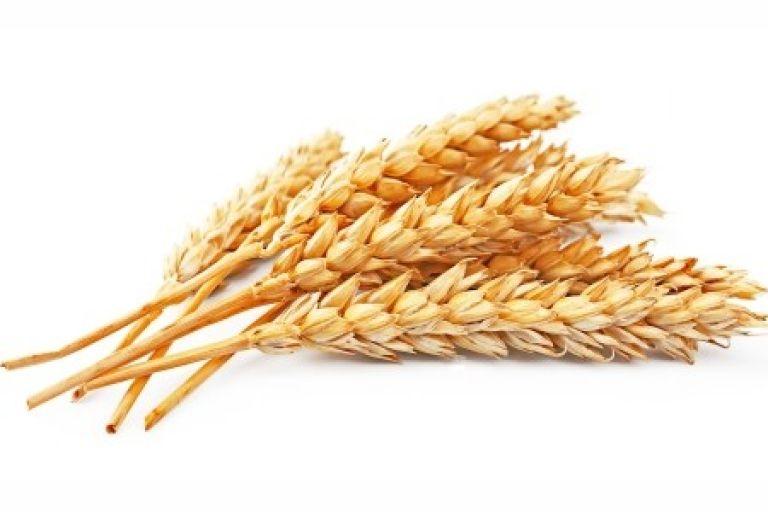 Программа защиты зерновых