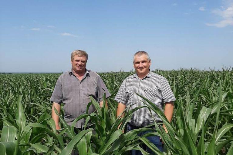 Цицерон на защите кукурузы