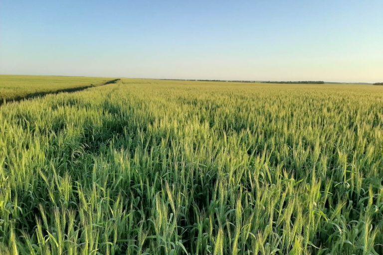 В Пензенской области в хозяйстве Венера-1 специалисты Кирово-Чепецкой Химической Компании помогли качественно составить систему защиты и увеличить урожай