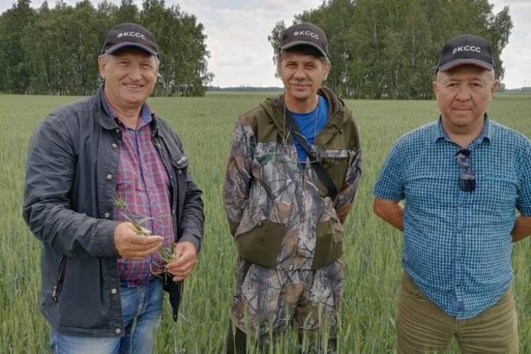 Яровая пшеница, Рапс, под надежной защитой с препаратами   Кирово-Чепецкой Химической Компании